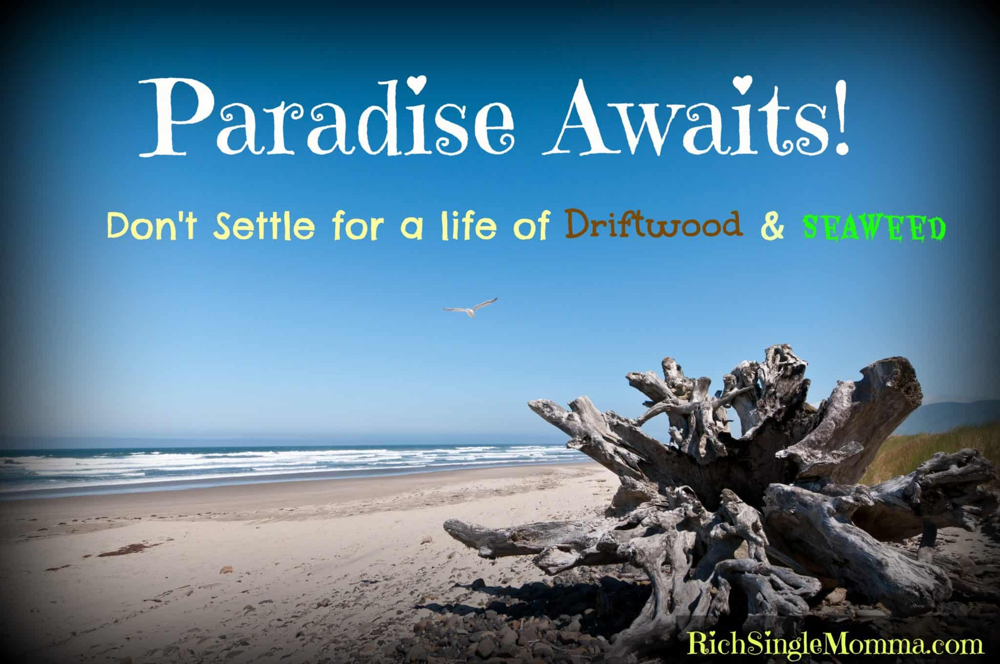 Vacation, Driftwood, and Seaweed